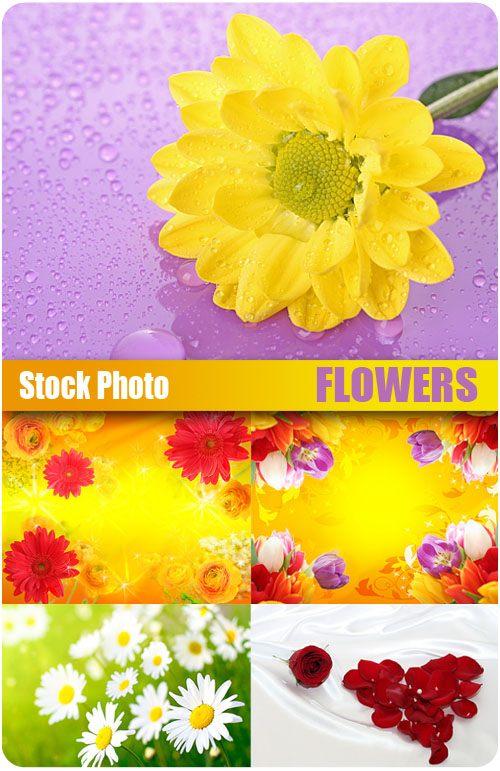 исходники для фотошоп цветы