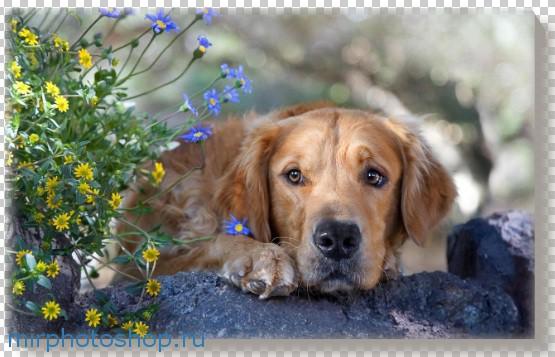 Фотографии в фотошопе собаки