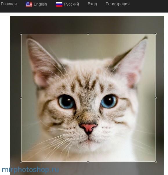 Как обрезать фото онлайн бесплатно и без смс?