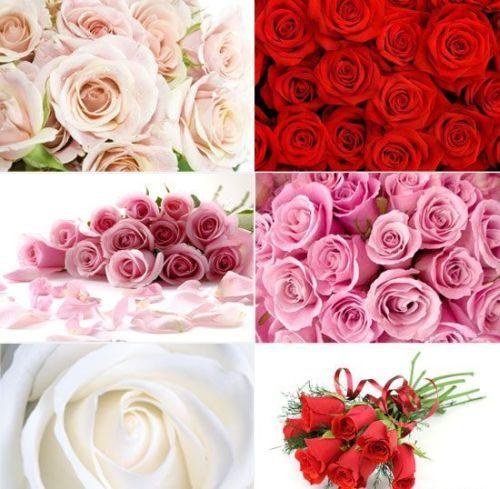 цветы, кисти для фотошоп