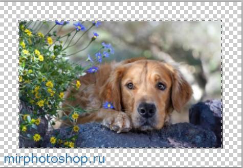 Собаки уроки по фотошопу онлайн