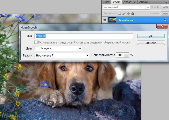Собака в фотошопе уроки по фотошопу